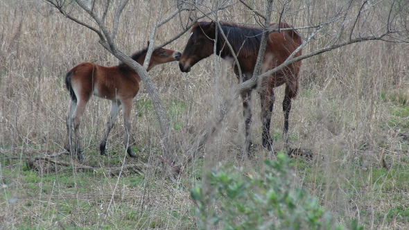 A wild colt's kiss on Paynes Prairie