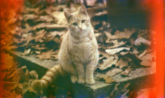An Autumn Cat, as photographed by Bryan Costin