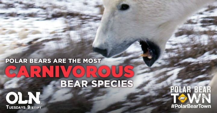 Polar Bears are Carnivores
